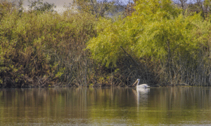 3 Interesting Facts About the San Joaquin Wildlife Sanctuary